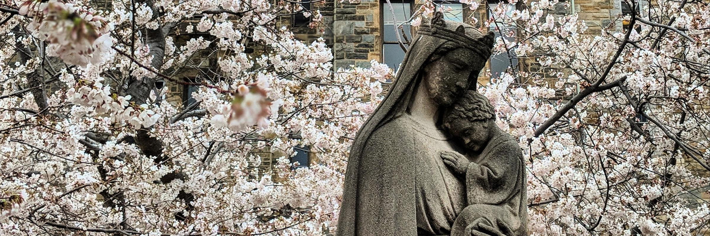 Statue of Blessed Mary and Christ Child surrounded by cherry blossoms